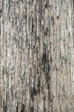 Écorce de tuxture d'arbre Image libre de droits