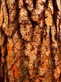 Écorce de Woody images libres de droits