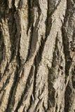 Écorce du tronc Photo stock
