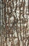 Écorce en bois Photo libre de droits