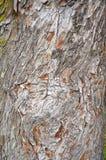 Écorce en bois abstraite de texture, arbre de cyprès images stock