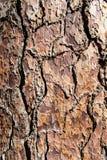 Écorce en bois de Brown en parc de yosemite en Californie Images libres de droits
