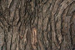 Écorce en bois de Brown, texture en bois, fond en bois foncé Photographie stock libre de droits