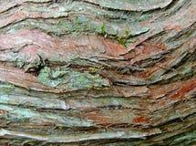 Écorce en bois de cèdre Images stock