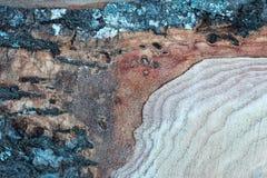 Écorce en bois de petit morceau de texture Photos libres de droits