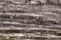 Écorce en bois texturisée Images libres de droits