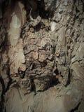 Écorce simple sur un arbre Le plus grands sculpteur et artiste est nature Les merveilles de la nature fascinent l'imagination image stock