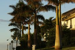 Écorce toilettée par avenue de palmier Photographie stock