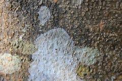 Écorce, une texture en bois abstraite d'écorce de Brown Photo stock