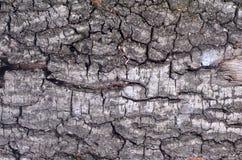 Écorcez un arbre Image libre de droits