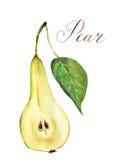 Écorché de poire d'aquarelle Illustration botanique Photographie stock
