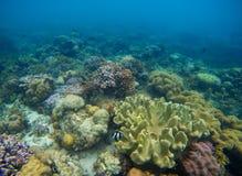Écosystème coloré de récif coralien sur le fond marin Paysage exotique de bord de la mer avec de l'eau propre et la lumière du so Photo stock