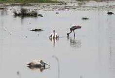 Écosystème d'oiseau d'eau Photo stock
