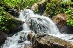 Écoulement d'eau dans la jungle photographie stock libre de droits