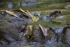 Écoulement d'eau par le caillou Photos stock