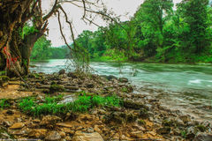 Écoulement de rivière dans la forêt photos stock