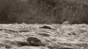 Écoulements de rivière