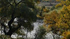 Écoulements rapides de rivière de montagne Vue par les arbres banque de vidéos