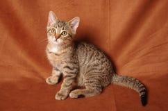 Écoute de chaton Photographie stock libre de droits