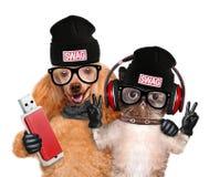 Écouteurs de chat et de chien Photographie stock libre de droits