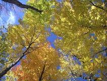 Écran d'automne photos libres de droits
