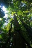 Écran de forêt humide photo libre de droits