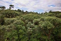 Écran de jungle de Rican de côte Image libre de droits
