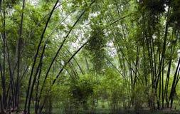 Écran en bambou vert Image stock