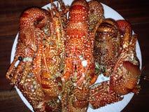 Écrevisses de homard photographie stock libre de droits