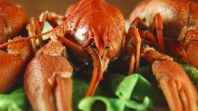Écrevisses de homards sur le plateau banque de vidéos
