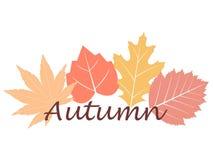Écriture de chute d'automne Photographie stock libre de droits