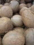 écrous de noix de coco Photographie stock