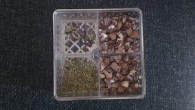 Écrous de scarabée dans un plateau Image stock