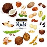Écrous, graine, ensemble d'icône de bande dessinée de haricot pour la conception de nourriture illustration libre de droits