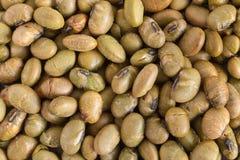 Écrous rôtis du soja Photo libre de droits