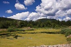 Écume d'étang Photographie stock