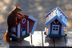 Écureuil à une cuvette d'alimentation Photo libre de droits