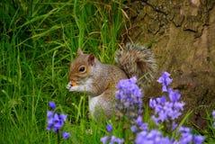 Écureuil ! images libres de droits