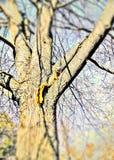 Écureuil affamé et son écrou photographie stock