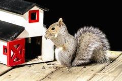 Écureuil avec des graines de tournesol Image libre de droits