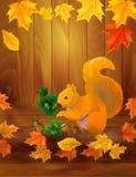 Écureuil avec des noisettes Photo stock