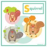 Écureuil avec l'anglais d'amis A à Z Images stock