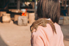 Écureuil avec l'humain Photographie stock