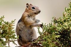 Écureuil dans l'arbre Photographie stock libre de droits