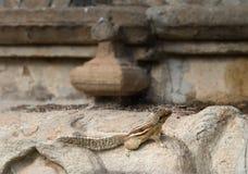 Écureuil dans le temple de l'Inde Images libres de droits