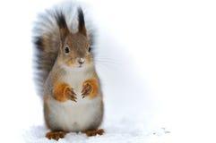 écureuil de fond image stock