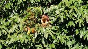 Écureuil de Malabar de géant Images stock