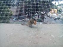 Écureuil en haut pour la nourriture images libres de droits