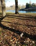Écureuil en parc Photographie stock