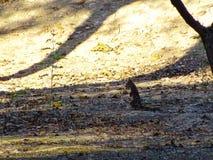 Écureuil en stationnement images libres de droits